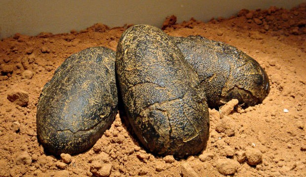 dinosaur eggs stolen from Dhar museum