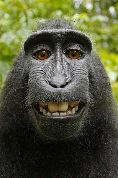 David Slater, the photographer behind this famous monkey selfie, is threatening to take legal action against Wikimedia after it refused to remove his picture because the monkey took it